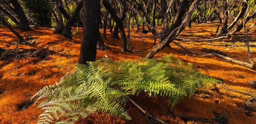 imagen_blog_viajes_bosques-en-otoño_garajonay