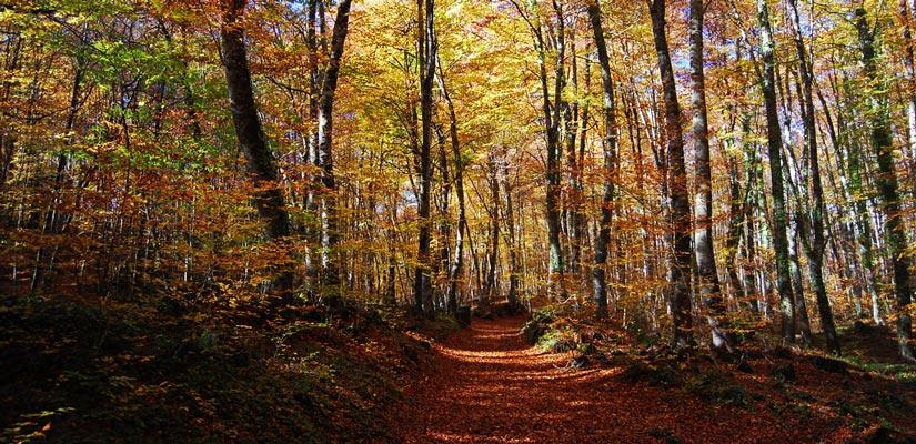 imagen_blog_viajes_bosques-en-otoño_garrotxa
