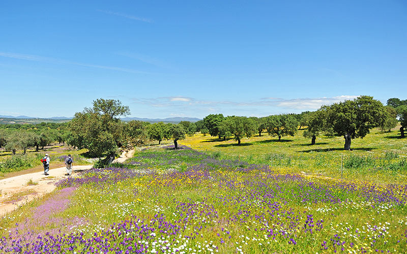 carretera de Extremadura