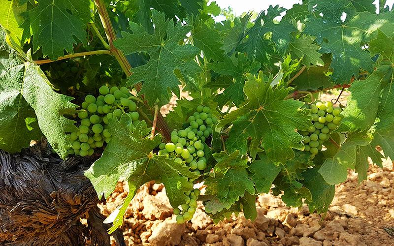 qué ver en corrales del vino