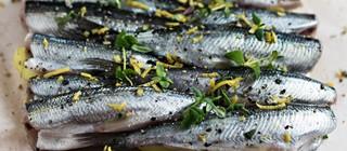 pescado jandia