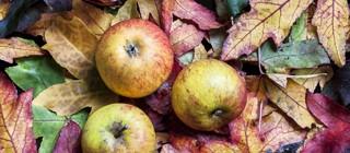 manzanas matanza acentejo