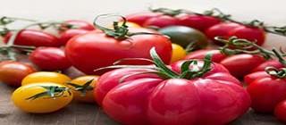 tomates cardona