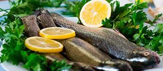 san romao retorta pescado