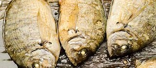 pescados benicasim