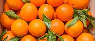 naranja velencia