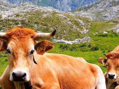 Un recorrido por la fauna en España