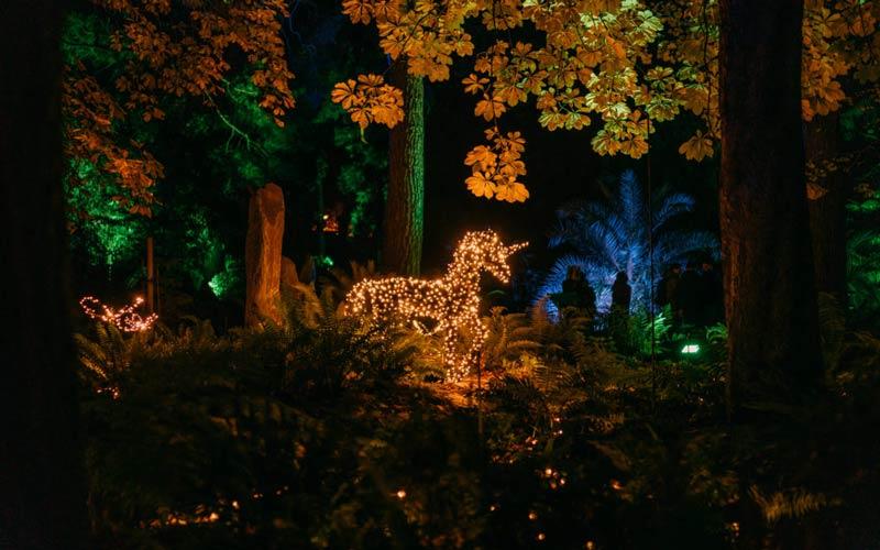 Foto:laslucesdelrealjardinbotanico.com