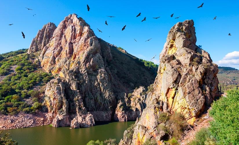 Buitres sobrevolando Monfragüe