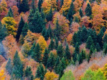 Navarra en otoño, un embrujo de colores