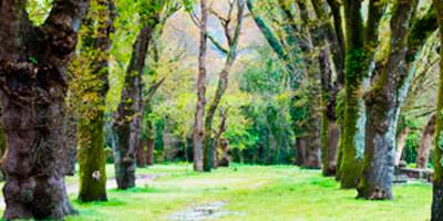 Jardín en Caldas de Reis