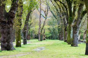 jardin botanico carballeira caldas reis
