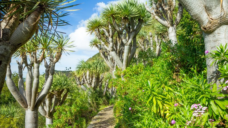Esta imagen de Gran Canaria podría servir para ilustrar el paraíso griego