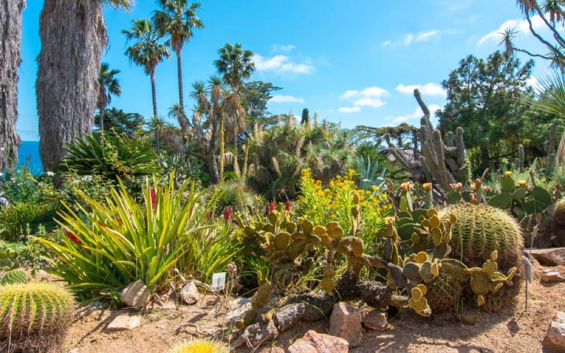 Cactus en Marimurtra