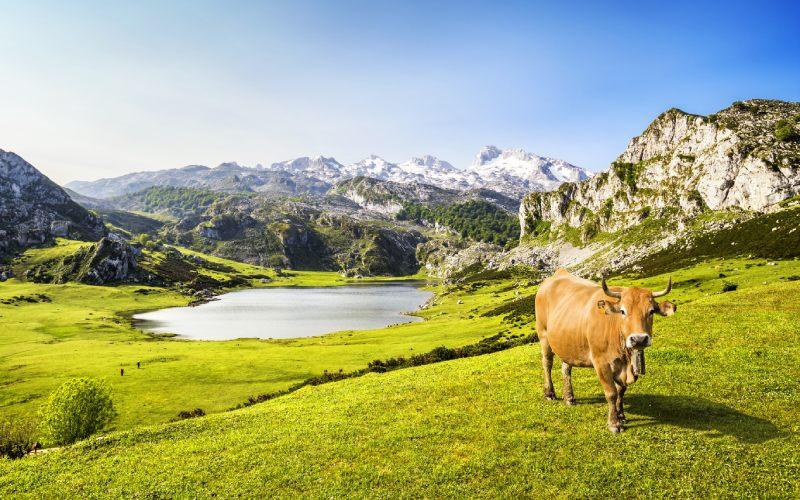 Pastos junto al Lago Ercina