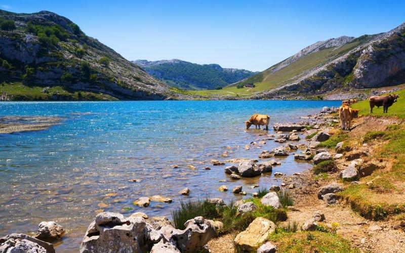 No hay un momento del año en el que los Lagos de Covadonga no sean apetecibles