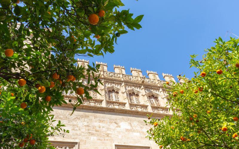 Naranjos en la Lonja de la Seda