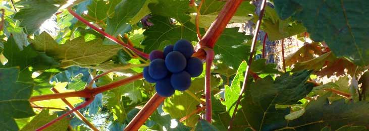 vino andalucia lebrija