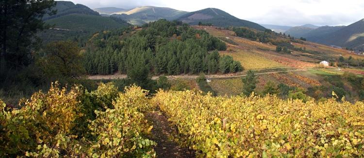 Vino Valdeorras