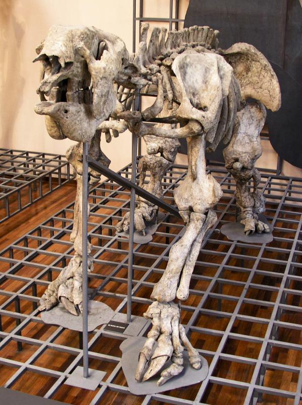 Esqueleto de Megatherium americanum en el Museo Nacional de Ciencias Naturales