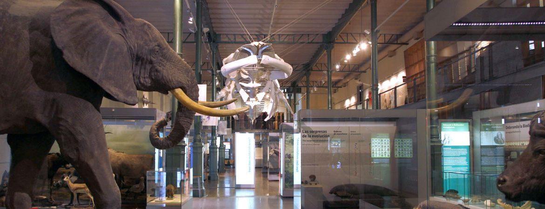 Exposición del Museo Nacional de Ciencias Naturales