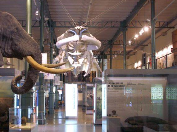 El MNCN, el museo público más antiguo de España, una oda a la naturaleza desde 1771