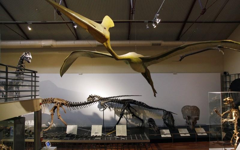 Recreaciones en el Interior del Museo Nacional de Ciencias Naturales