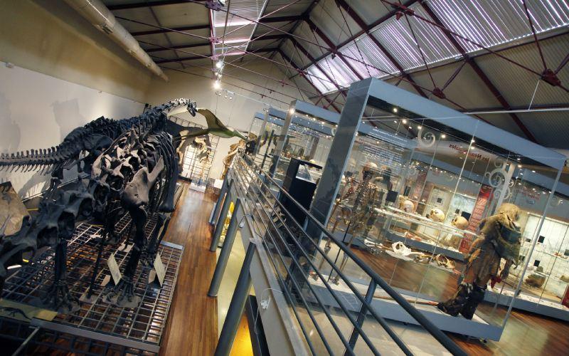 Muestra del Museo Nacional de Ciencias Naturales