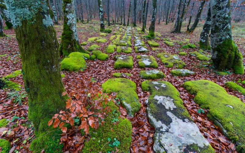 Sendas del Monte Santiago en otoño