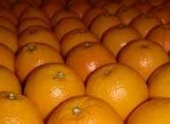 naranjas benicasim