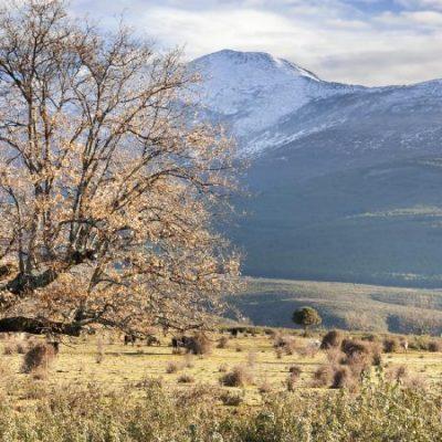 Pico Ocejón, el faro de Guadalajara | El Rincón del Finde