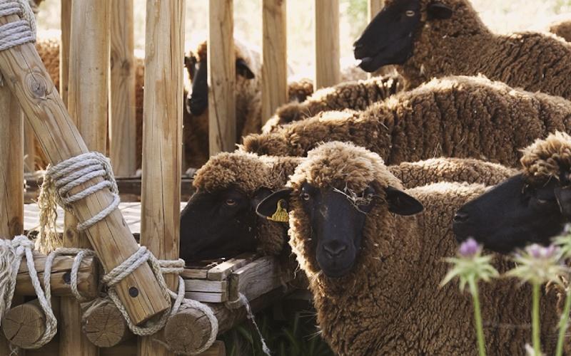 La oveja es el animal que mejor esculpe el paisaje