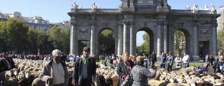 Fiesta de la Trashumancia en Madrid