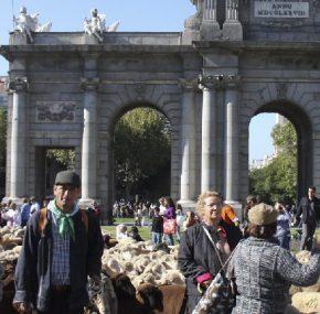 Fiesta de la Trashumancia en Madrid, cuando las ovejas invaden la capital