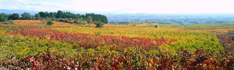 Denominación vinos de Bierzo