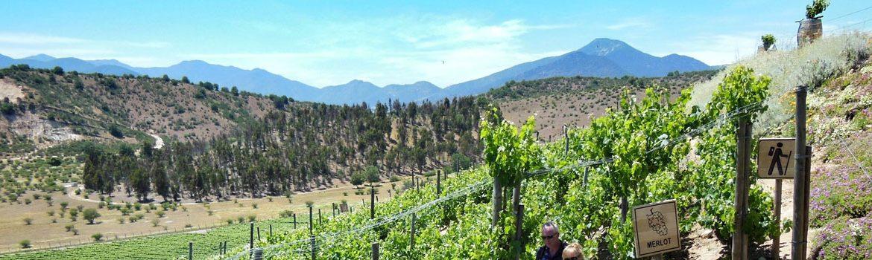 Denominación Vino Valles de Benavente
