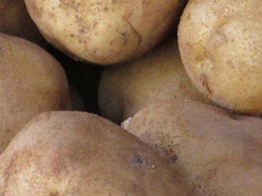 Patates de Prades