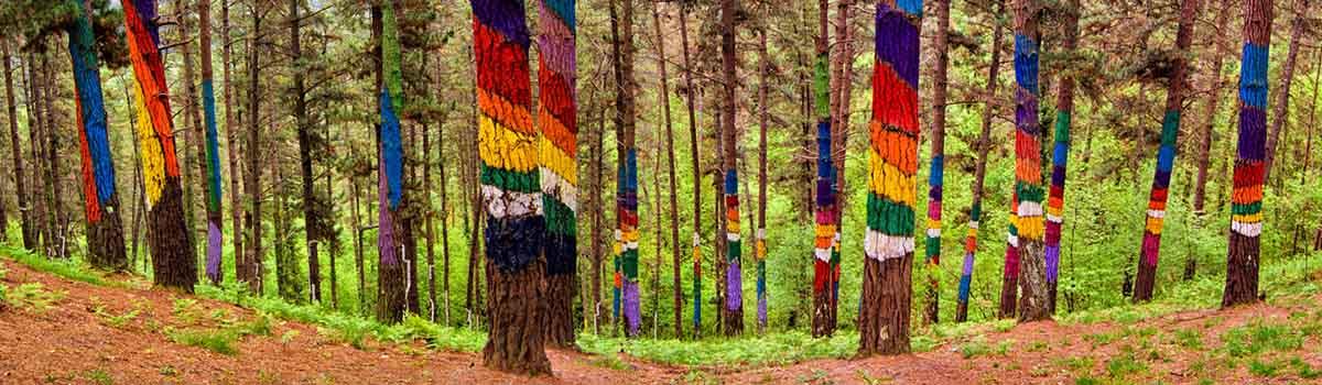 bosque osma espana fascinante