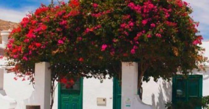 Dónde dormir en Haría - Lanzarote