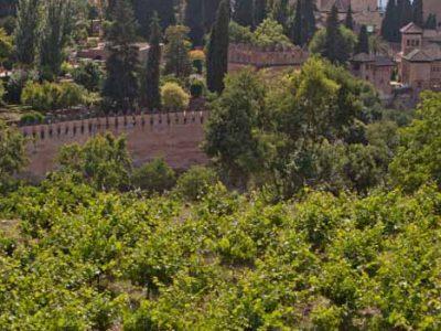 Vinos de Granada