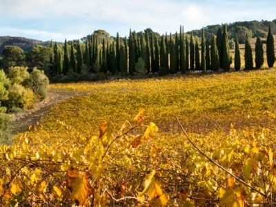 Vinos de Navarra