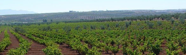 Denominacion Vinos Ribera del Guadiana