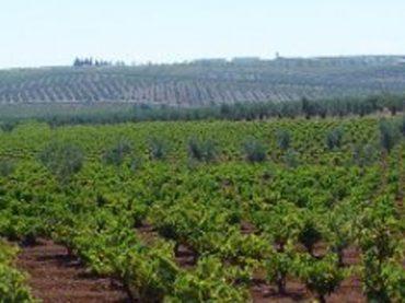 Vinos Ribera del Guadiana