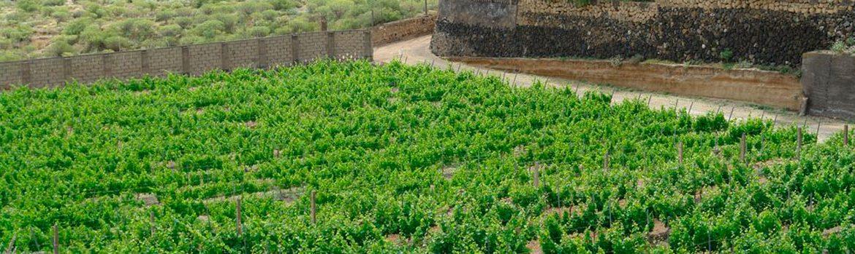 Denominacion Vino Taraconte Acentejo