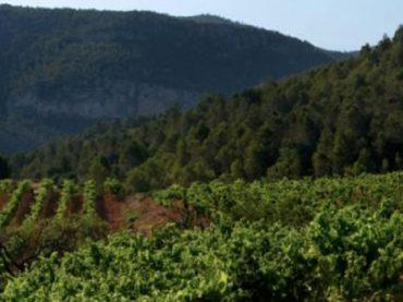 Vinos Montsant