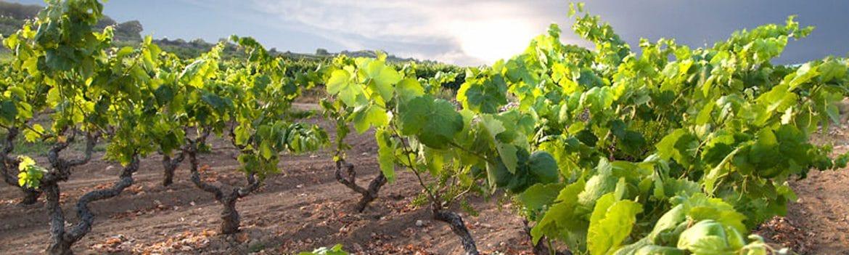 Denominacion Vinos de Tarragona