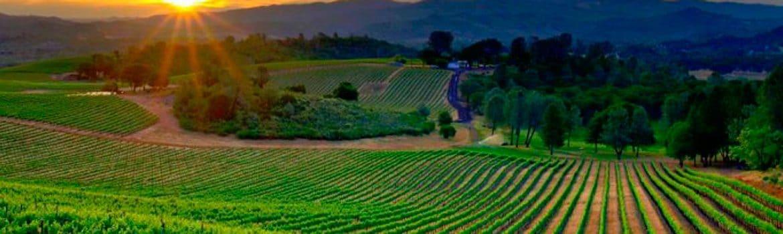 Denominacion Gran Canaria vinos