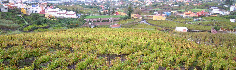 Denominacion Vino Valle de Guimar
