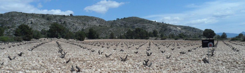 Denominacion vinos de Alicante