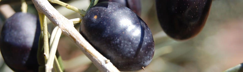 Aceite Monterrubio